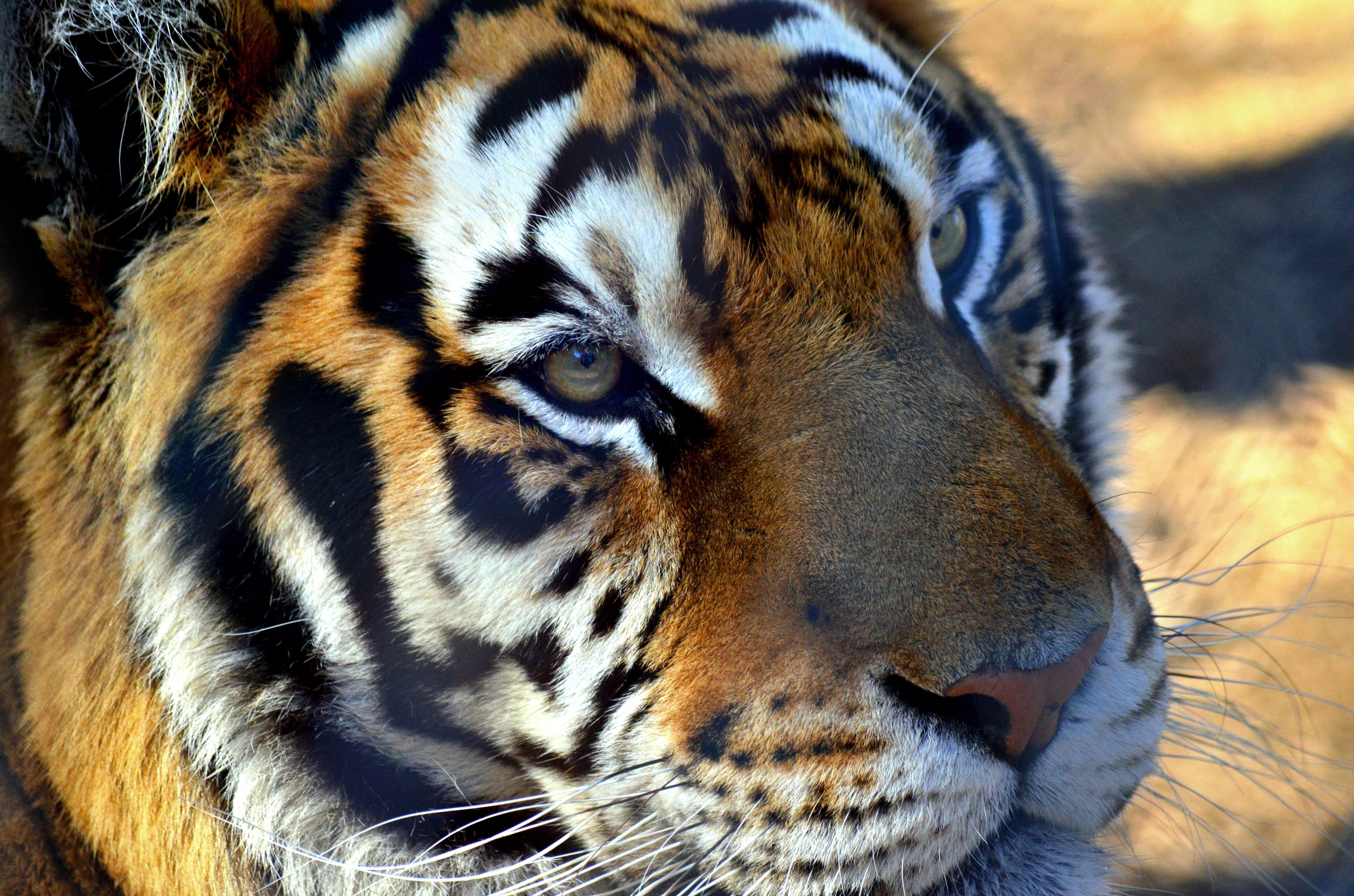 Carolina Tiger Rescue Tours