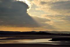 Lapwing's flight (Arnside Gladders) Tags: kent estuary lapwing rays sandside