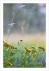 Wild flowers bokeh (Andrea Rapisarda) Tags: flowers summer nature nikon estate zoom bokeh natura frame tele wildflowers fiori etna gettyimages mtetna d800 200mm sfocato sigma70200mm ©allrightsreserved fioridicampo