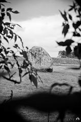 Scenes from Avebury Henge (34 of 44) (Keith Bloomfield) Tags: megalithic monument standingstones worldheritagesite wiltshire nationaltrust prehistoric avebury pagan neolithic stonecircle aveburyhenge thehenge