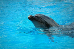 Good Morning Sunshines (Terezaki ✈) Tags: life blue happy zoo mediterranean searchthebest dolphin hellas greece pictureperfect naturesfinest anawesomeshot flickrdiamond theperfectphotographer natureselegantshots