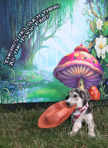 Photo - Winner - There is no Poop Fairy! Dog photo contest
