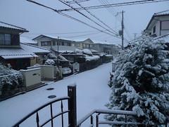 Snow scene (雪景色) (MRSY) Tags: winter white snow japan 日本 osaka 雪 冬 izumi 白 大阪府 和泉市
