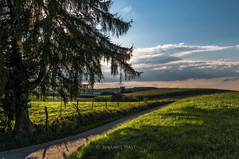 Was ist Bayern? (HastigeSichtweisen) Tags: bayern abend sonnenuntergang wolken weg idylle tanne ebersberg ewigkeit traxl