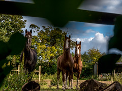 We see you (Mayur Shivz - Photography) Tags: horse animal panasonic hempstead g6 hemel 14140
