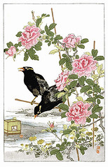 China rose, dandelion and common hill myna (Japanese Flower and Bird Art) Tags: china flower art rose japan japanese book hill picture rosa dandelion common asteraceae woodblock nihonga taraxacum religiosa chinensis myna rosaceae kono sturnidae gracula readercollection bairei