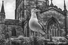 DSC_1408 (Javier Colmenero) Tags: escocia edimburgo reinounido