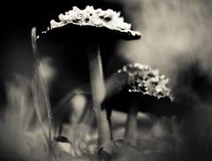 Infected Mushroom.
