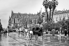... (Fabienne G) Tags: winter rainyday rain water street streetphotography noiretblanc noirblanc blackwhite blackandwhite city people urban séville spain architecture