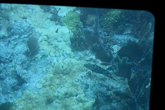 26. John Pennekamp glass bottom boat (Misty Garrick) Tags: johnpennekamp johnpennekampreef johnpennekampcoralreefstatepark coralreef florida keylargofl keylargo floridakeys atlanticocean