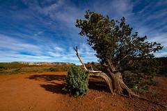 Sedona, Arizona (frankryanjess) Tags: arizona sedona hiking arizonahiking cathedralrock livesimple livesimply getoutside getoutdoors takeahike adventure nature explore wanderlust