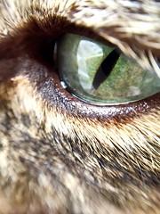 Cat eye (dani_alex_23) Tags: iphonelenses iphonemacrolens macroeye macro macrolens cateye cat