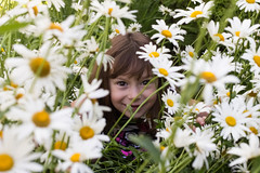 06-09-14 Hiding (dmoranphotog) Tags: flowers girl daisies garden kid child project365 afavoriteplace cy365