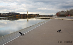 The artistry of ravens (i-lenticularis) Tags: ruleofthirds crows canberra canon5dmkiii ef4028 landscape landschaft