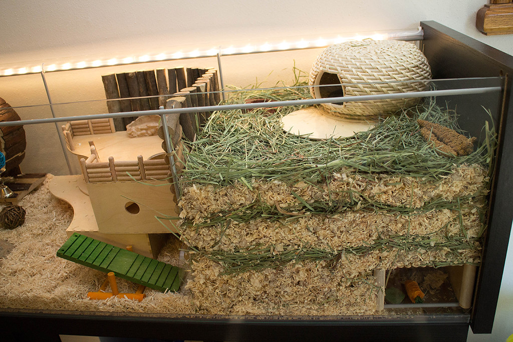 How to Set Up a Gerbil Cage How to Set Up a Gerbil Cage new picture