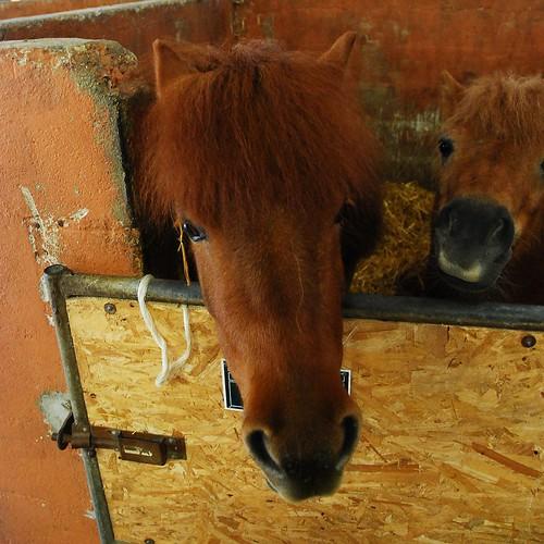 11 - Centre équestre de Santeny Chevaux et poneys