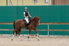 DSC05478_s (AndiP66) Tags: horse macro sports sport schweiz switzerland jumping sony july luzern sp di if juli alpha tamron concours pferd equestrian f28 solothurn ld horsejumping 70200mm wettbewerb 2014 springen kantonsolothurn balsthal springreiten cantonsolothurn wolhusen andreaspeters pferdespringen grueb martinameyer 77m2 a77ii ilca77m2 77ii 77markii slta77ii
