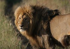 africa animals southafrica capetown safari