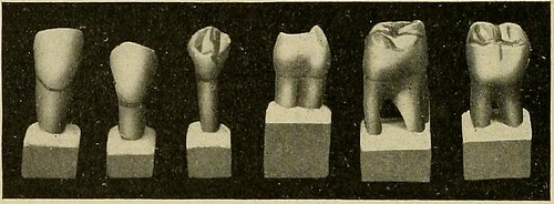 "Image from page 55 of ""Operative and dental anatomy technics; a class-room and laboratory manual for freshmen dental students"" (1914)"
