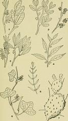 Anglų lietuvių žodynas. Žodis genus lythrum reiškia genties lythrum lietuviškai.