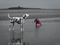 Dalmatian Watch (Rory Wheeler) Tags: ireland dublin dog playing beach girl landscape lowlight toddler fujifilm dalmatian x20 martellotower skerries skerriesbeachdublin