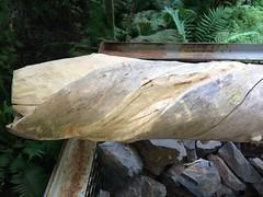 Schraubenbaum (thmlamp) Tags: wood sculpture detail workinprogress skulptur holz metall bearbeitung holunder sambucusnigra fotostream schraubenbaum thomaslamp screwtree drehwuchs 20132014 holunderstamm