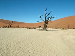 2008_0526Image1113 (claudio6411) Tags: namibia landscape panorama deserto paesaggio sunny nature