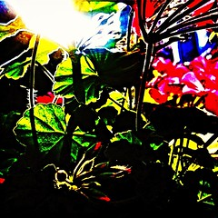Flowers in the summer (forte.tyler) Tags: ocean life sanfrancisco california nyc bridge pink flowers autumn red sea brazil england espaa plants newyork paris france london love church nature beautiful beauty boston japan yoga contrast port germany private munich square la nikon shoes colorful asia exposure mediterranean waves purple exercise pacific wine florida fb box body walk smoke jet australia bio running hike sneakers atlantic explore foodporn chemistry bonita bloom vase caribbean biology eco natureporn iphoneography instagramapp brasl