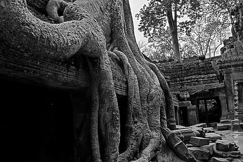 Ta Prohm temple and tree 2.