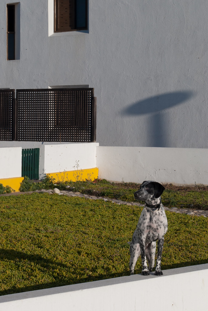 The Worlds Best Photos Of Chien And Spot Flickr Hive Mind