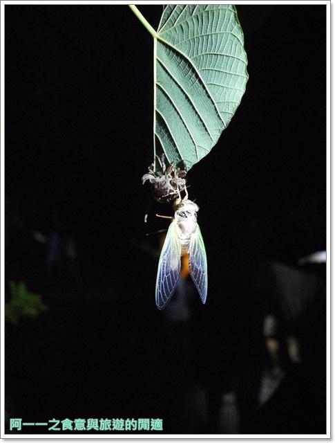 台東旅遊景點夜訪小野柳釋迦冰淇淋image025