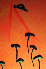 "saucer (Etching Stone) Tags: cloud mushroom stone closeup flow grey education energy power magic dream ufo aliens buster flyingsaucer alpha ea 石 tale saucer 云 菇 primordial 魔 教育 梦 流 碟 传说 电力 灰 幽浮 能量 外侨 ""特写"" ""飞碟"" 电针 阿尔法 始基 巴斯特"