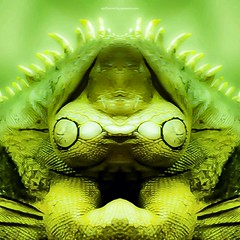 g o b b l e r (epiclectic) Tags: reflection animal photoshop mirror design graphic wildlife humor perspective manipulation images symmetry reflect symmetrical mutant twisted enhancement epiclecticcom epiflection epiflectionbyepiclecticcom