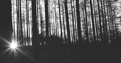 fading light (PdD Photography) Tags: trees 35mm sunburst sunrays bnw