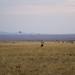 African safari, Aug 2014 - 092