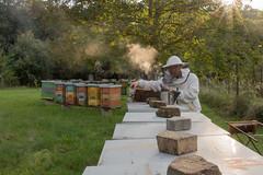 Mhszet, mhszkeds (csiro.hu) Tags: smoke bee honey miele biene honig mz miod fst lp mh kaptr