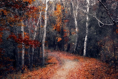 Autumn's Footsteps (karenhunnicutt) Tags: autumn minnesota gallery fallcolors minneapolisphotographer karenhunnicutt karenmeyer fallpaths karenhunnicuttphotography karenhunnicuttphotographycom minneapolisfineart artandsoulstudios minnesotatourisim