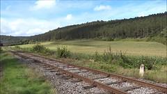 CFV3V Military steamtrain arriving in Olloy-sur-Viroin. (Franky De Witte - Ferroequinologist) Tags: de eisenbahn railway estrada chemin fer spoorwegen ferrocarril ferro ferrovia