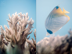 Fish Eye Marine Park (s-c-photography) Tags: park fish eye marine underwater nemo anemone guam fisheyemarinepark
