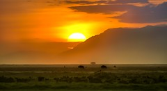More sunset hues of the dreamlike wilderness, Amboseli (Poulomee Basu) Tags: africa sunset wild orange holiday topf25 landscape nikon kenya 100v10f safari wilderness wildebeest biodiversity amboseli africansafari orangeskies abigfave nikond90 sunsethues wildlifehaven d90colour