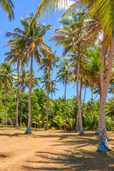 At The Countryside: Santa Magdalena Beach -- Image 05 (Pete Toshio) Tags: travel sea summer vacation panorama beach canon wow landscape island eos bay countryside adobephotoshop coconut philippines sigma sunny panoramic telephoto adobe tropical coconuttree bicol tropics lightroom beachresort sorsogon santamagdalena wowphilippines 550d adobephotoshoplightroom 18250mm petertoshiro bicolregion rebelt2i kissx4 wowbicol morefuninthephilippines morefuninbicol santamagdalenabeachresort sorosogonprovince