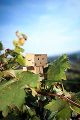 Walking the Line (dennis.brendel) Tags: portrait plants pflanzen danbo danboard cartonrobot cardboardhero