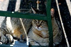 keeping cool (overthemoon) Tags: summer lake hot animals cat schweiz switzerland suisse lausanne shade svizzera animalpark vaud romandie sauvabelin