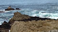 IMG_1217 (mudsharkalex) Tags: california pacificgrove pacificgroveca