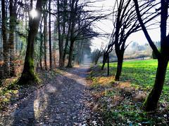 Am Waldrand (almresi1) Tags: weg way path sun schatten bäume wald trees forest wood rotenberg stuttgart