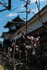 Hiroshima Castle Ninomaru (hirorin2013) Tags: 広島城 広島城二の丸 神社仏閣城郭 ウメ 木 植物 hiroshimacastle hiroshimacastleninomaru prunusmume 広島市 広島県 日本 jp