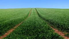 Green space - exploring mysterious horizons (jeannie debs) Tags: green greenspace space horizon blue sky dof outdoor nature vivid