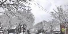 A Snowy day (Saidur Khan) Tags: snow street snowyday winter blizzard winterstorm