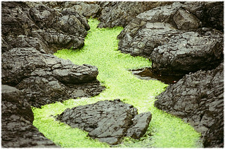 Algal Growth in Tidal Pool at Wya Point - Yashica FX-3 with Tokina 1:4.0 80-200 mm Zoom & Fuji ISO 400 Superia Film