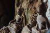 Cobwebs on Buddha Statues, Pak Ou Caves, Laos (AdamCohn) Tags: 055kmtobanpakouinlouangphabanglaos banpakou buddha buddhism buddhist laos louangphabang mekongriver pakou pakoucaves geo:lat=20051486 geo:lon=102217647 geotagged